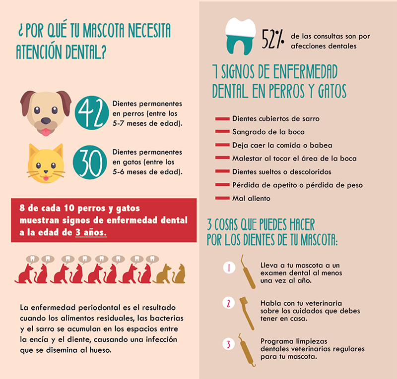 Salud dental, dolores dentales, mascotas
