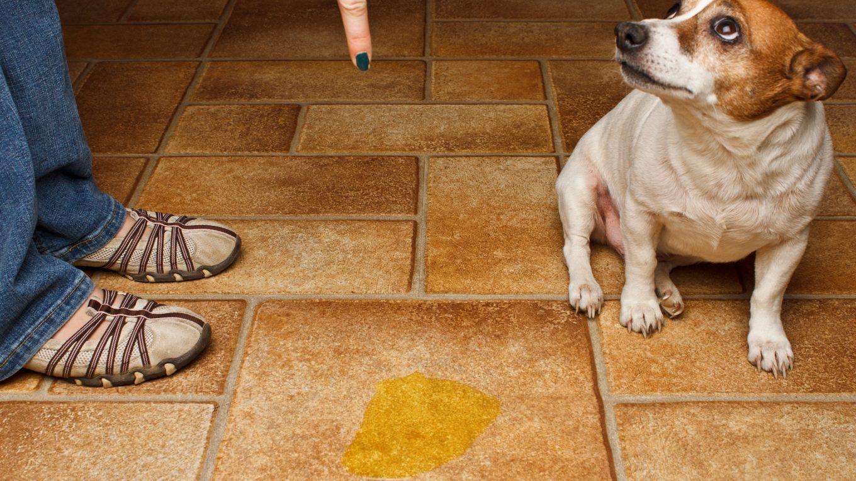 La orina de tu perro