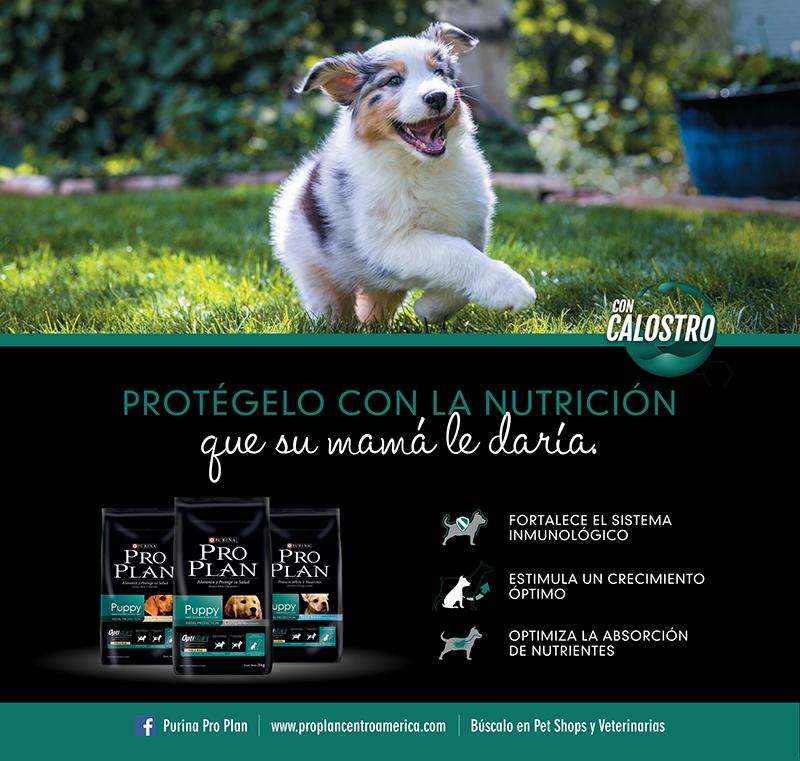 alimentación en un cachorro-Purina Pro Plan