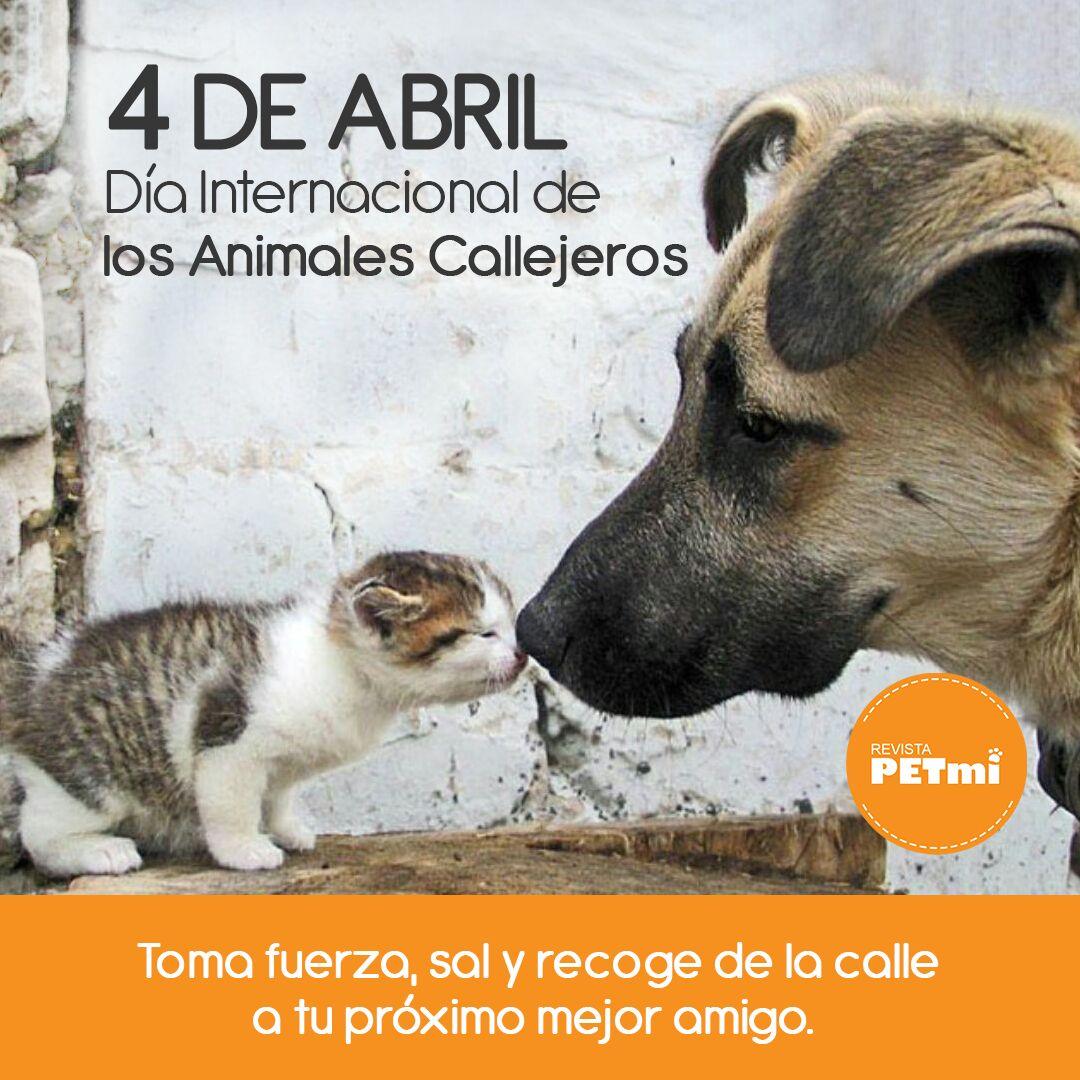dia internacional de los animales callejeros