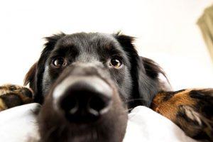 perro aburrido