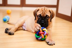 perro aburrido-Juguetes adecuados para mascotas