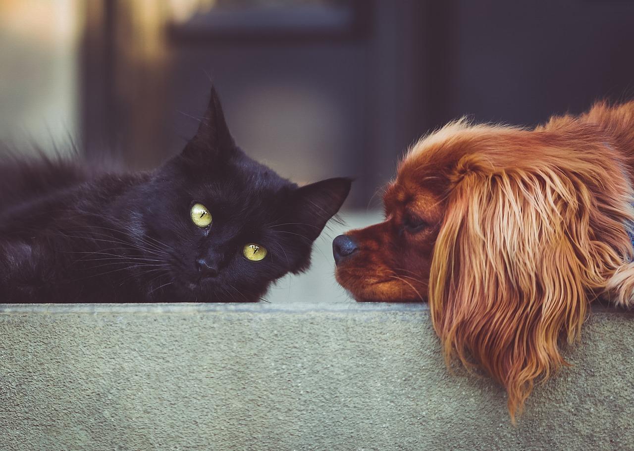 enfermedades cardiacas en mascotas 2