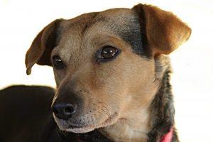Enfermedades Cardiacas en mascotas