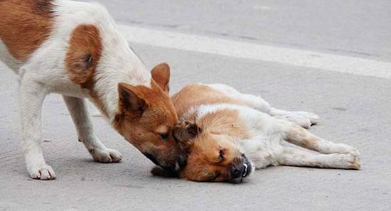 perros callejeros de Rusia
