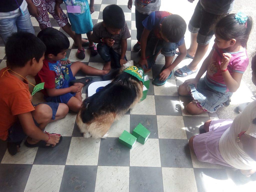 Dog Therapy Guatemala