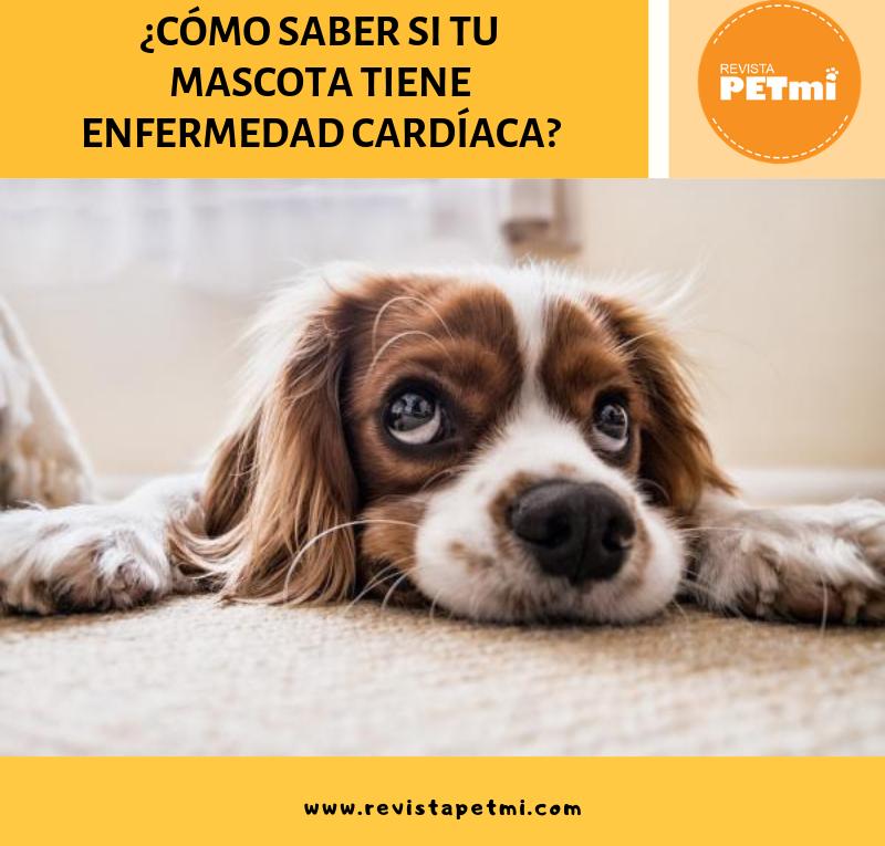 ¿Cómo saber si tu mascota tiene enfermedad cardíaca?