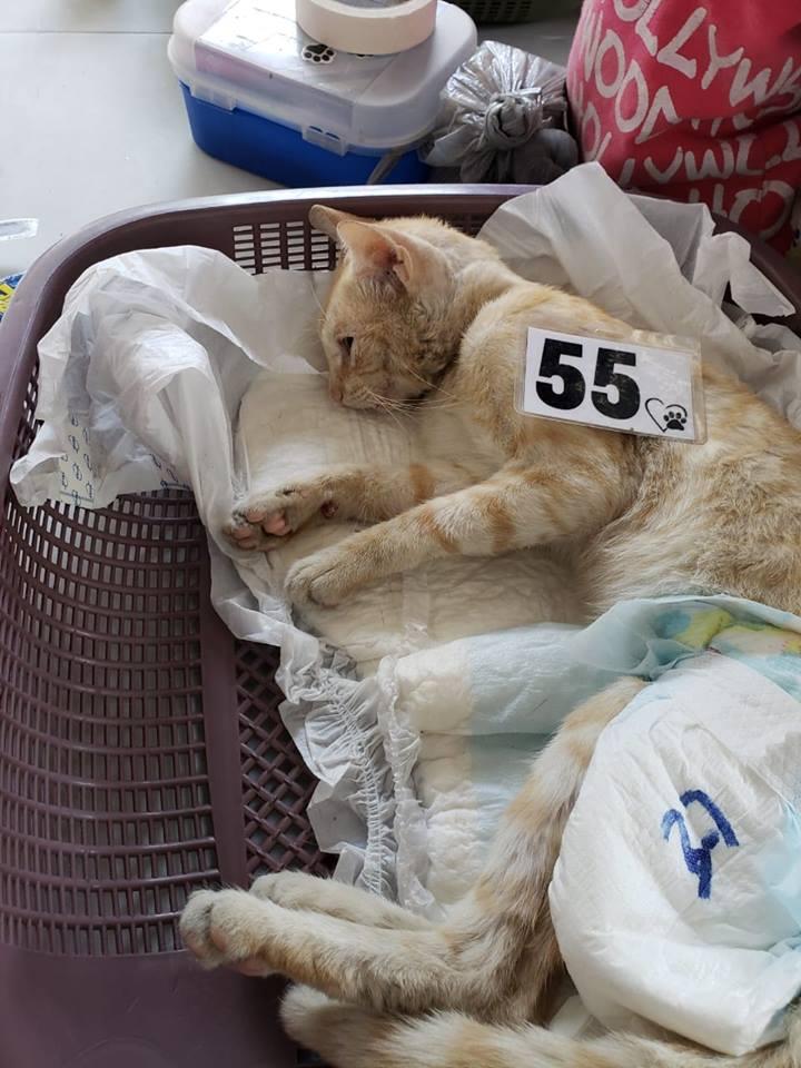 gato abandonado en una jornada de castración