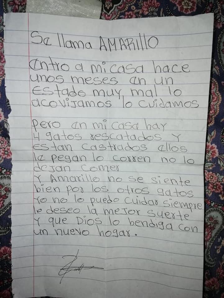 carta de gato abandonado en una jornada de castración