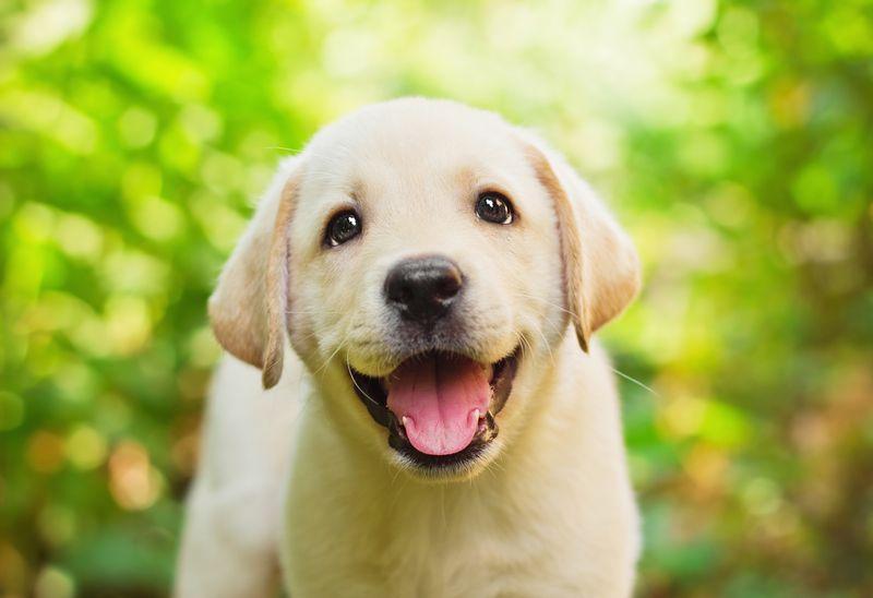 sonrisa radiante para tu perro