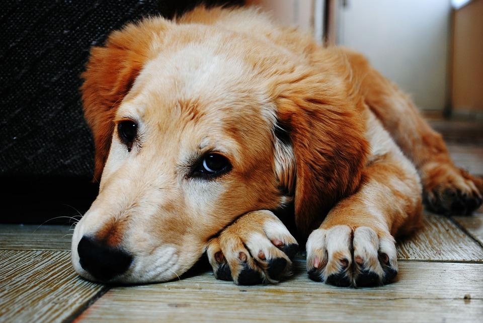 Locanto, comprometido con el bienestar animal