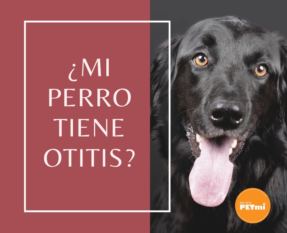 ¿Mi perro tiene otitis?