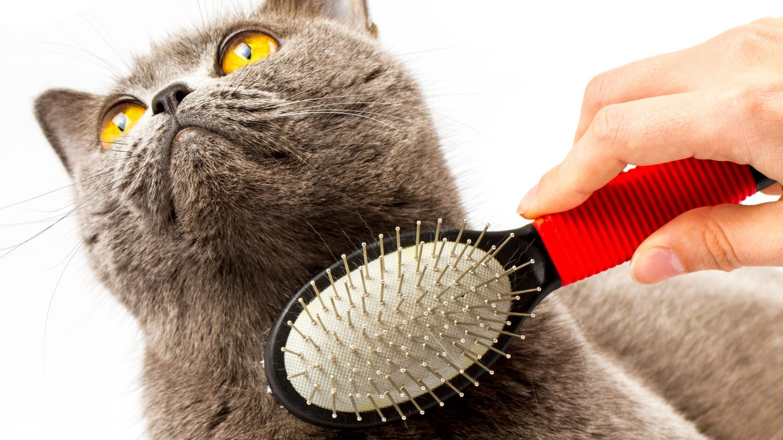 La importancia de cepillar a mi gato