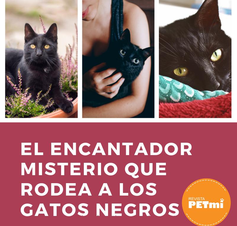 El encantador misterio que rodea a los gatos negros