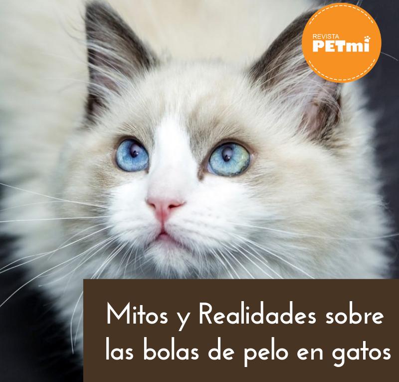 Mitos y Realidades sobre las bolas de pelo en gatos
