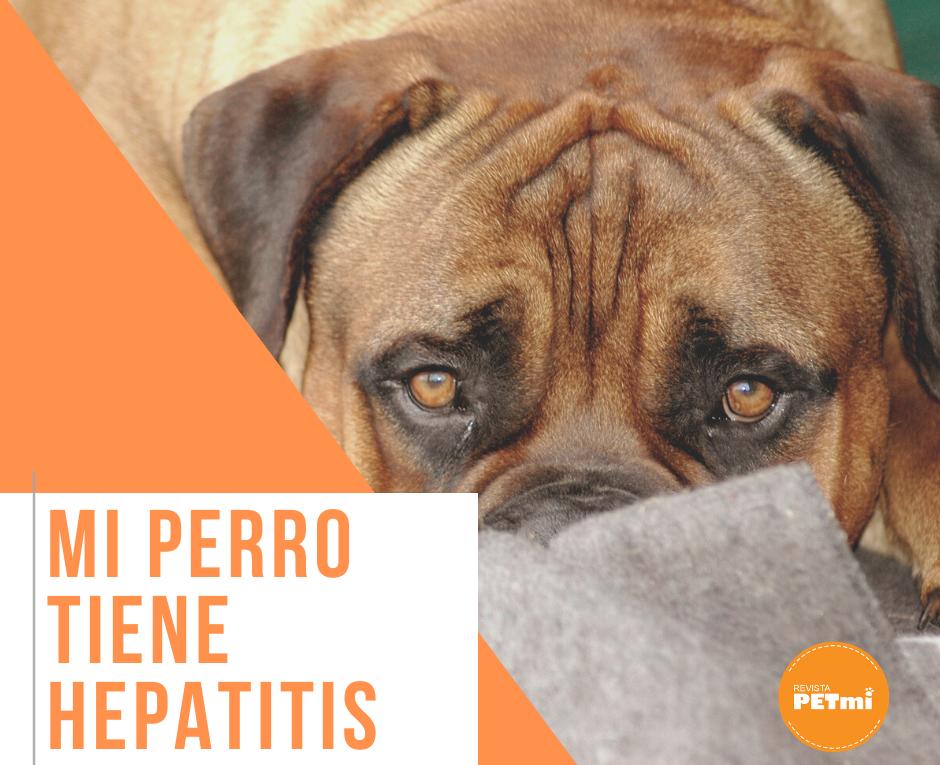 Mi perro tiene hepatitis