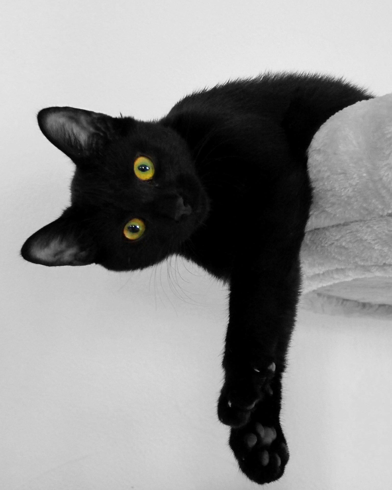 mitos de los gatos negros
