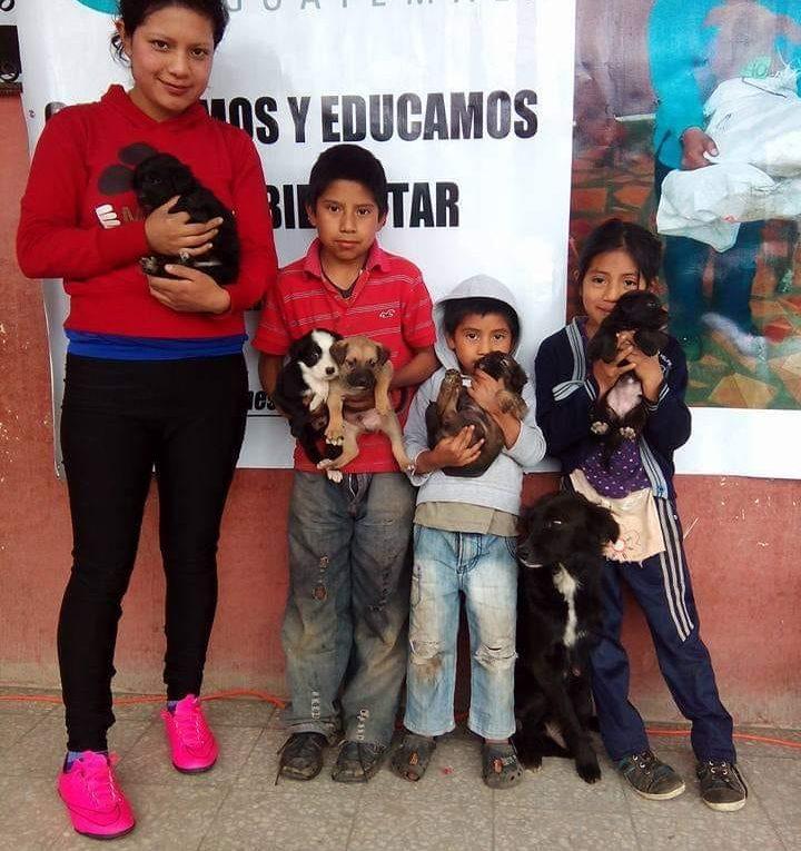 Castraciones Guaus y Miaus Guatemala3