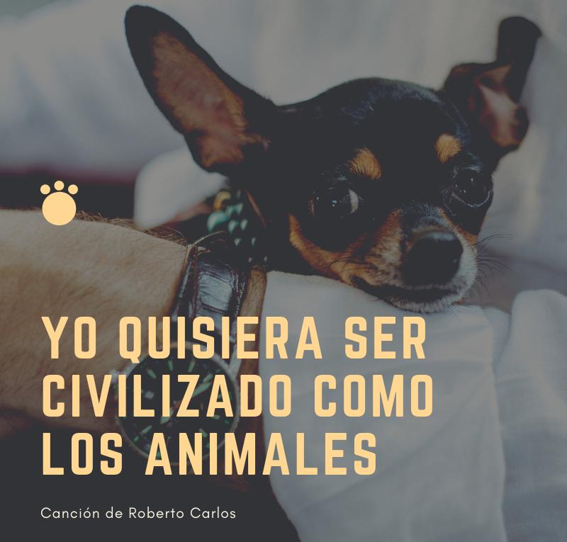 Yo quisiera ser civilizado como los animales