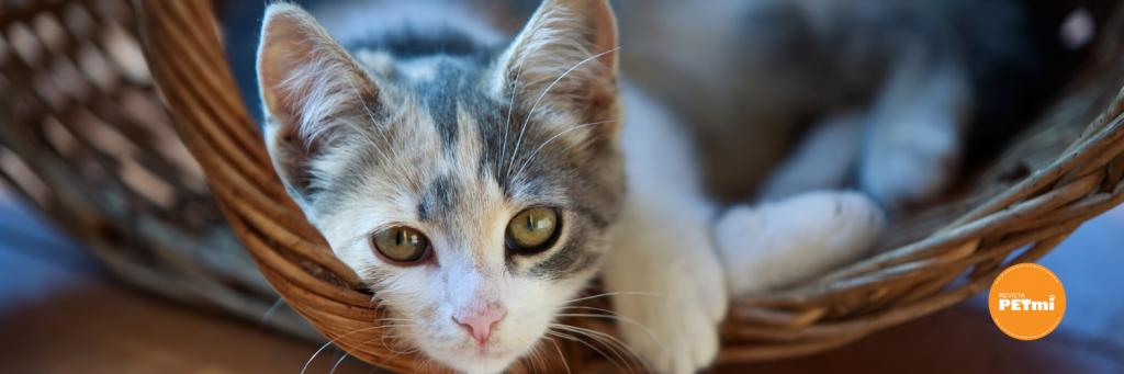3 reglas básicas para convivir con vecinos anti-gatunos