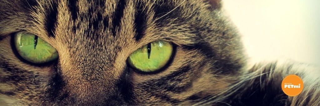 ¿Gato o gata? quienes son los más cariñosos