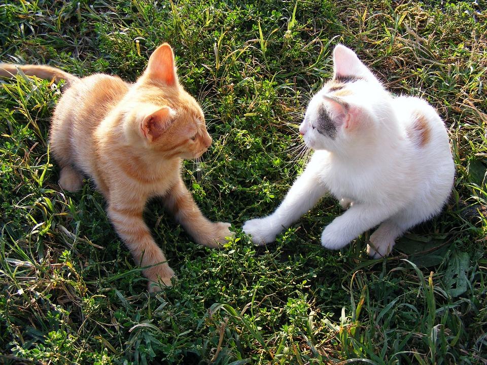 gato o gata son lo mejor