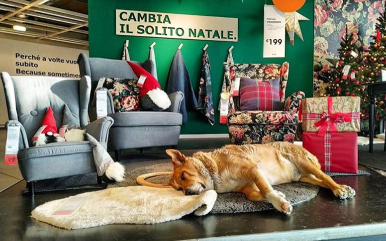 tienda de muebles Ikea se convierte en refugio para perros callejeros