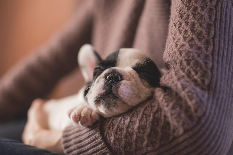 todo sobre el cuidado de los cachorros