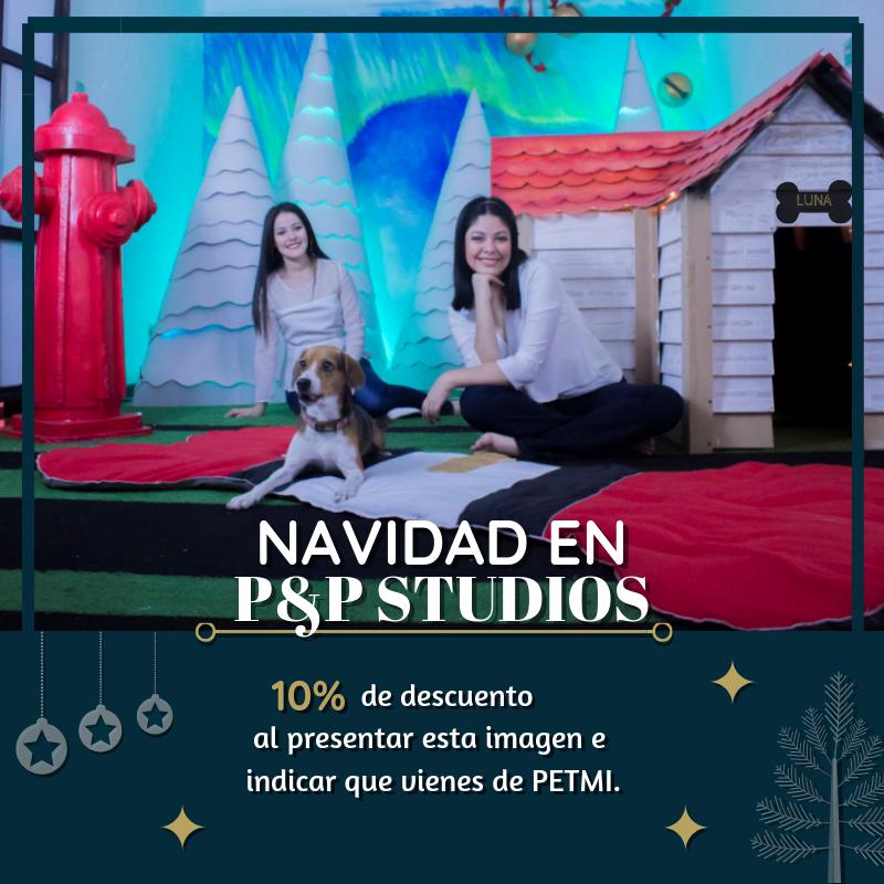 Sets navideños pet friendly guatemala