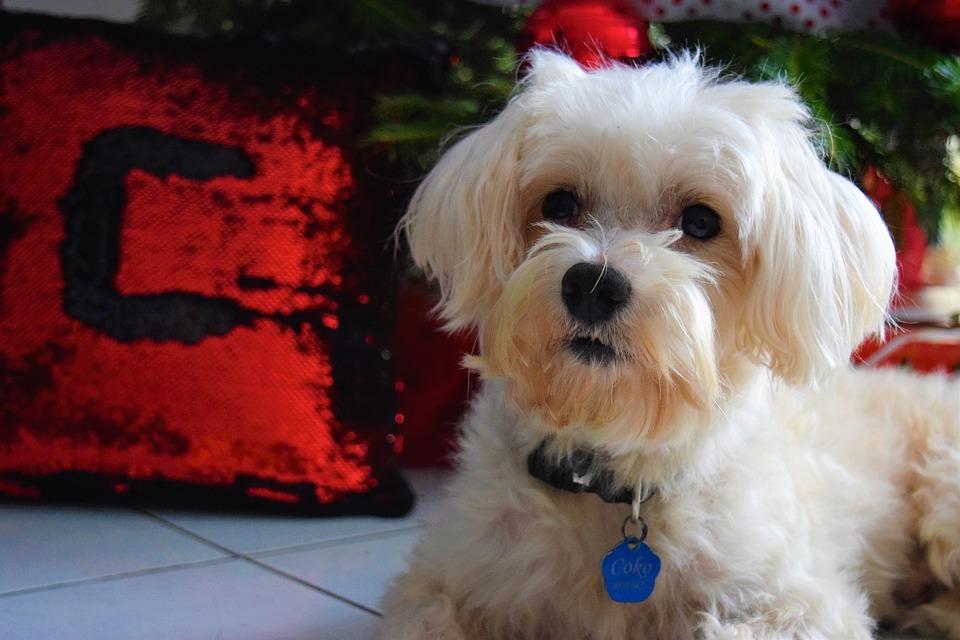 Previene infecciones gastrointestinales en tu mascota