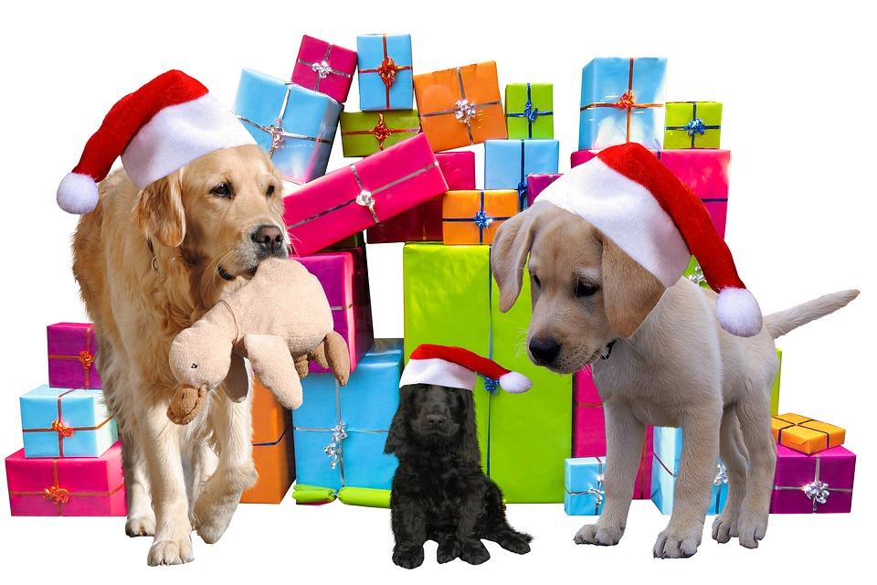 ideas de regalos de navidad para mascotas en Navidad
