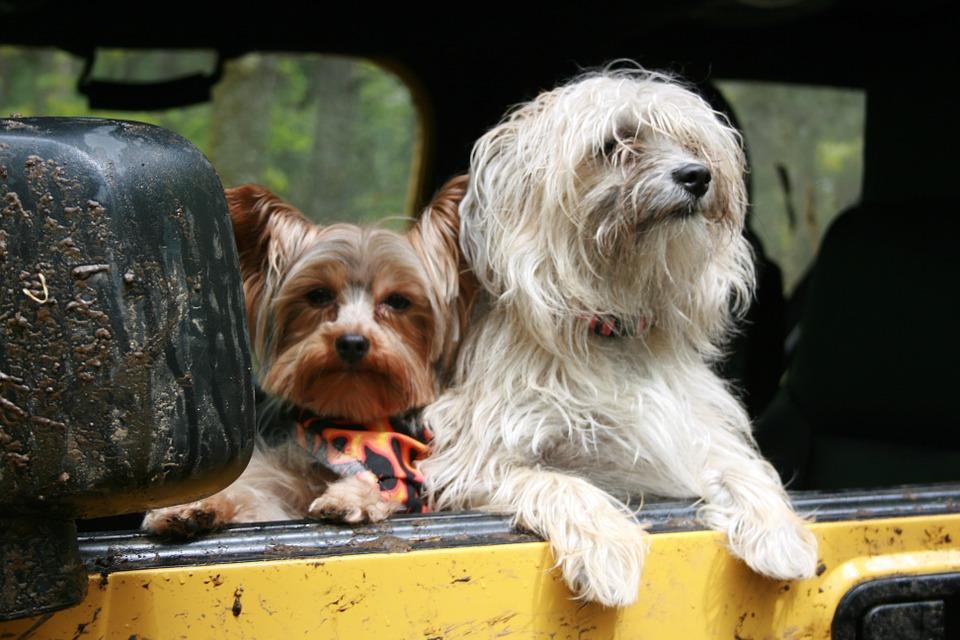 vacaciones y mascotas lo que debes saber