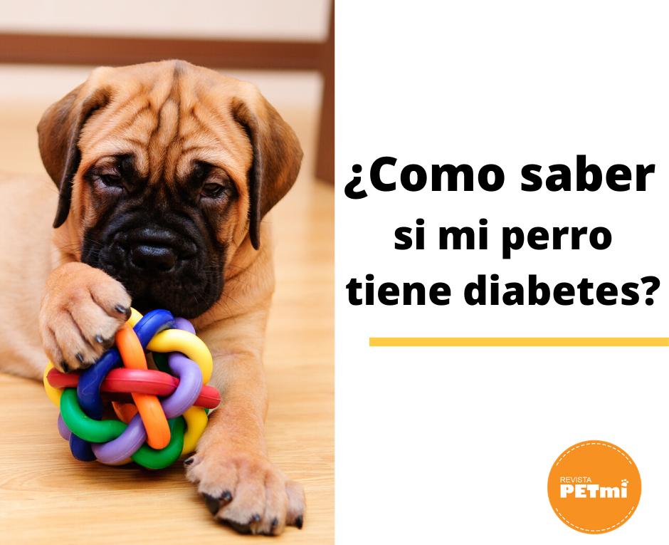 ¿Como saber si mi perro tiene diábetes?
