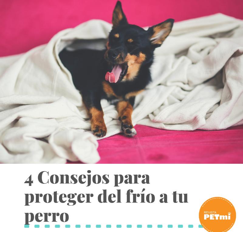 4 Consejos para proteger del frío a tu perro