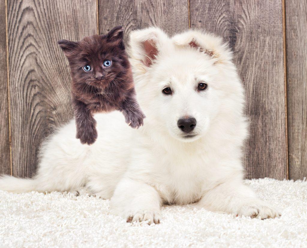 Mi-gato-no-puede-convivir-con-mi-perro