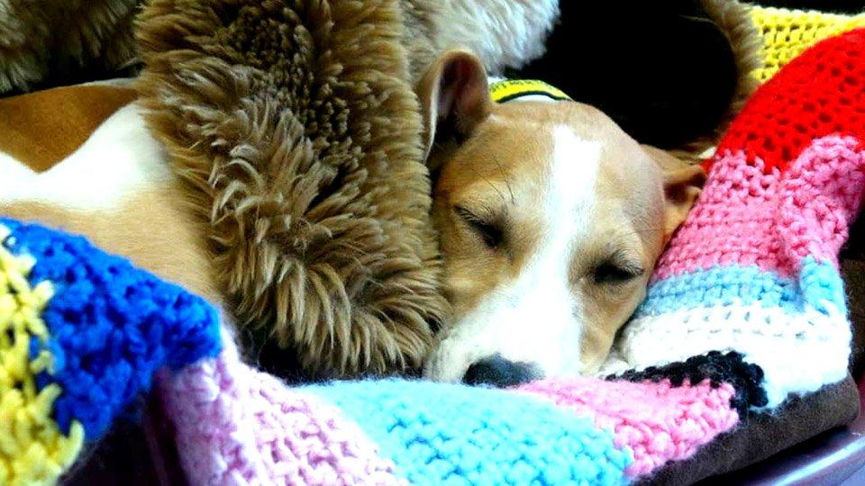 Abuelita-ha-tejido-más-de-450-abrigos-y-mantas-para-perros-de-un-refugio