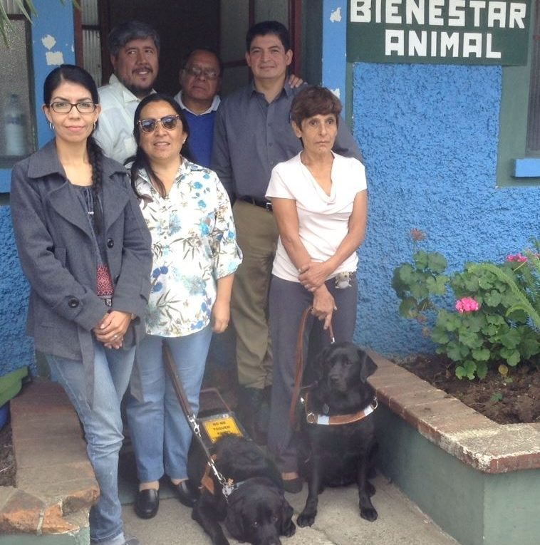perros lazarillos podrán ingresar a los lugares publicos y privados en Guatemala