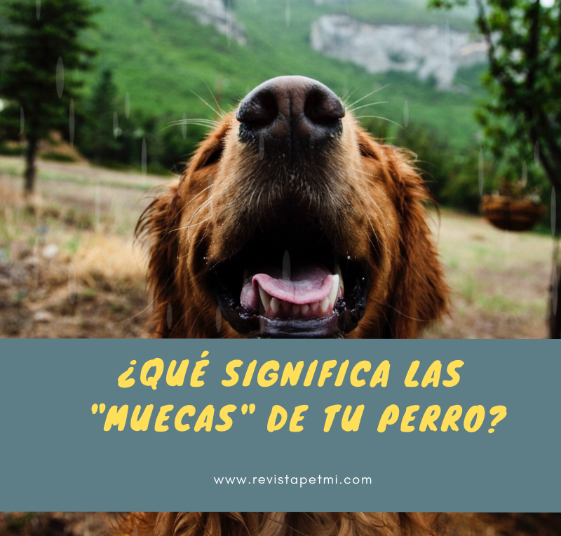 ¿Qué significa las muecas de tu perro_