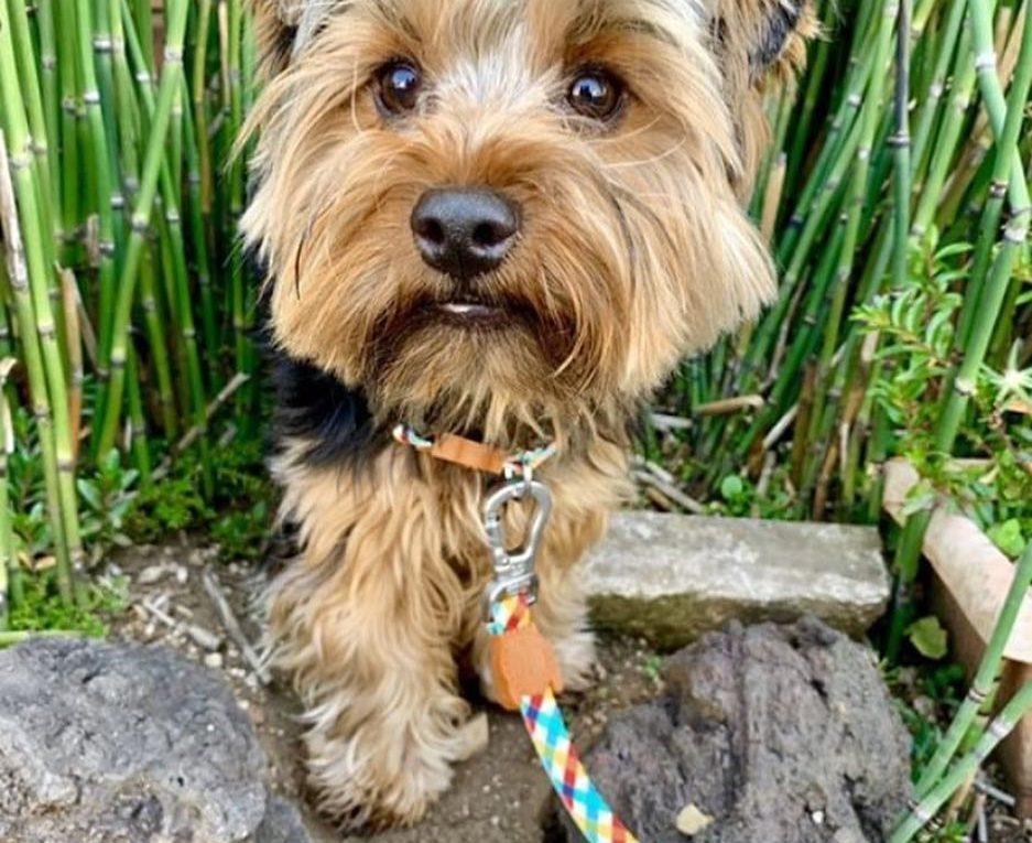 doghood_gt conectando perros y humanos