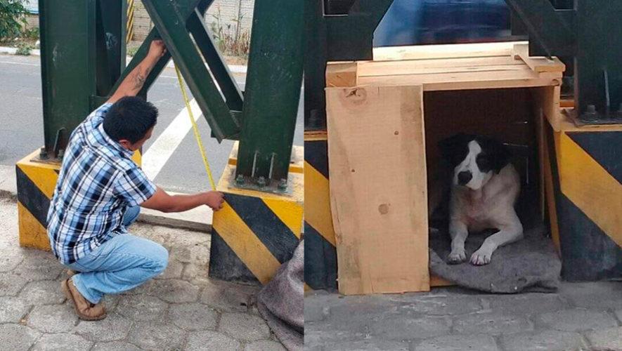 Julio hernandez construye una casa a un perro sin hogar