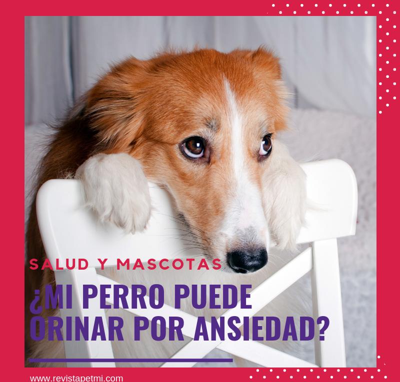 Salud y mascotas, mi perro puede orinar por ansiedad