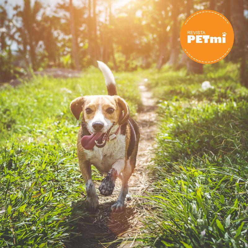 consejos para correr con tu perro (1)
