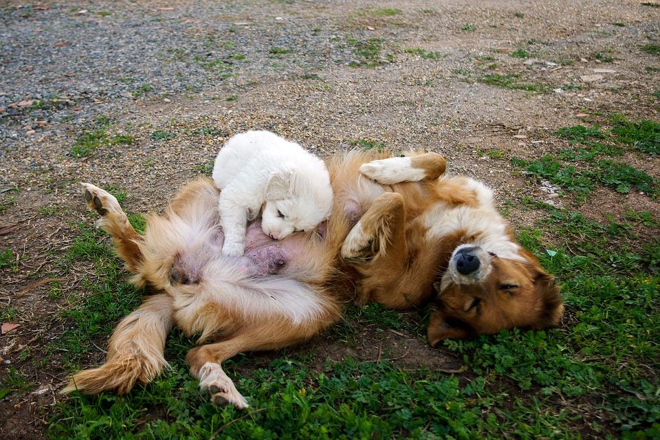 controversia por castraciones de perros y gatos a bajo costo
