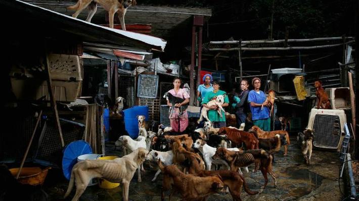 las mascotas están pasando hambre en Venezuela