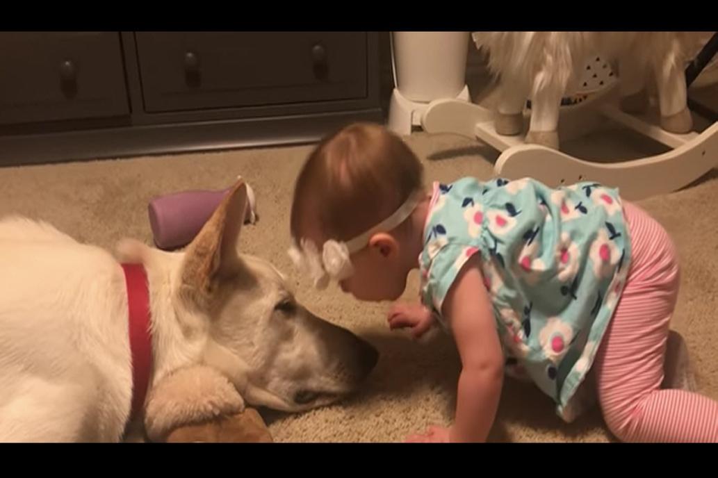 tierna reacción de una beba y un perrito