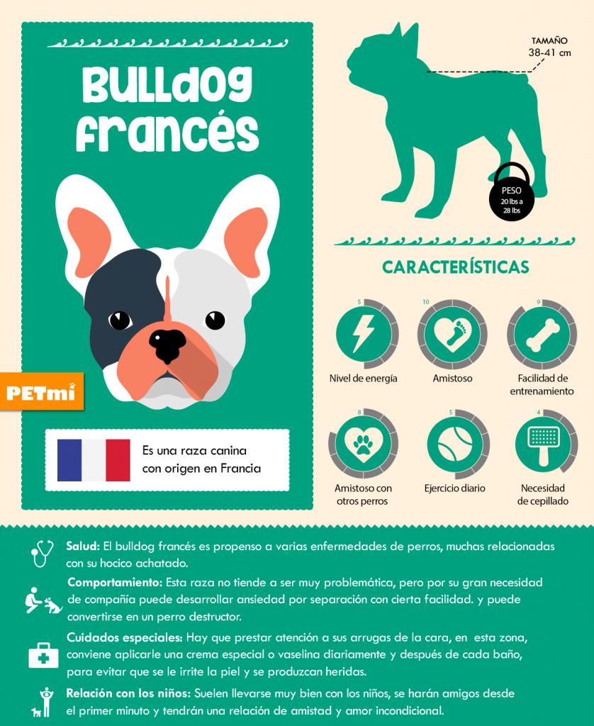 Bulldog Francés Infografía