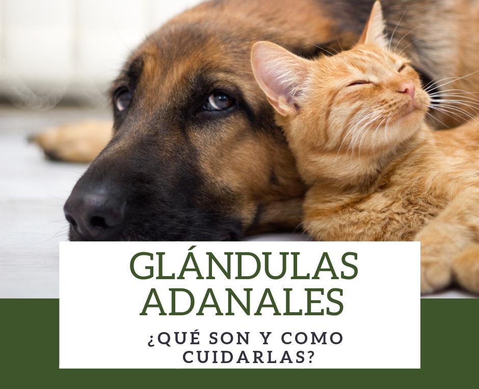 Glándulas Adanales ¿Qué son y como cuidarlas_ (2)