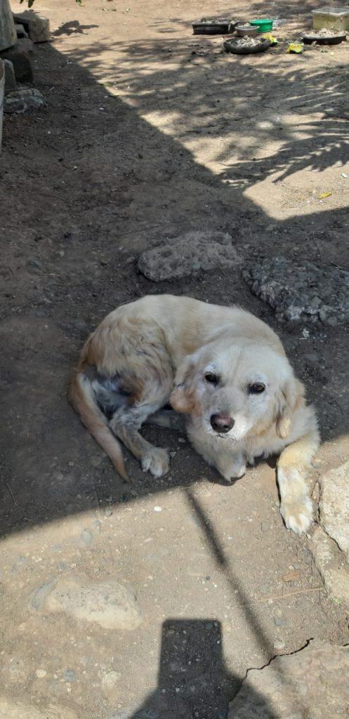 perros-con-sarna-reciben-ayuda-de-nexgard-1