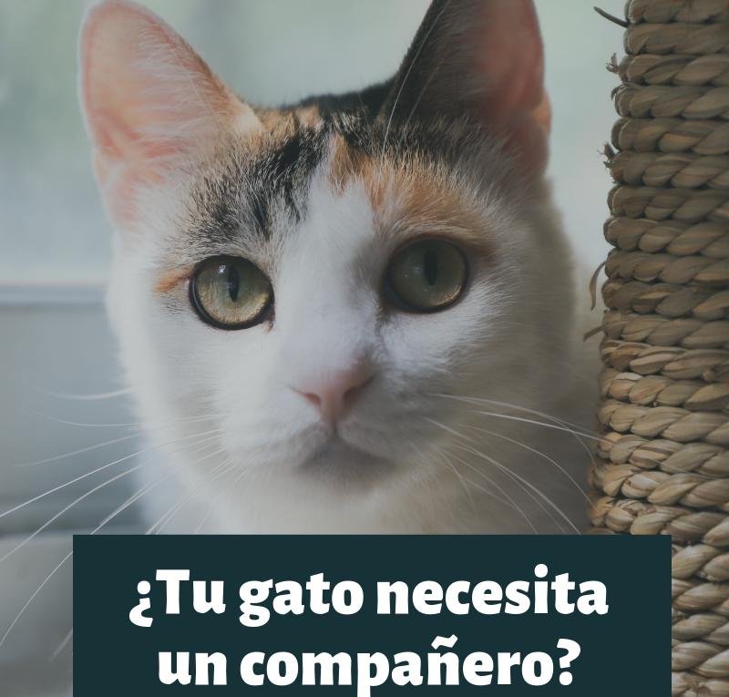 Un compañero para tu gato, ¿una buena idea_ (3)