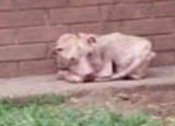 bolt y su triste y desgarradora historia de crueldad animal